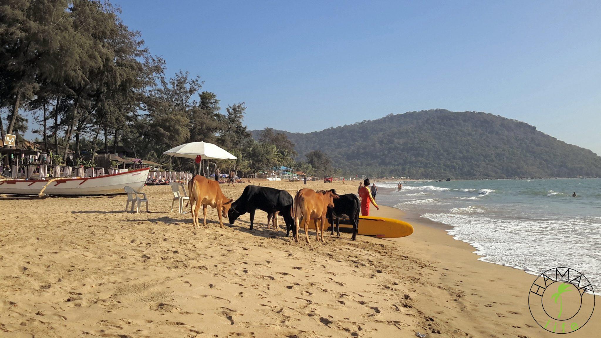 Luksusowe plaże na Goa