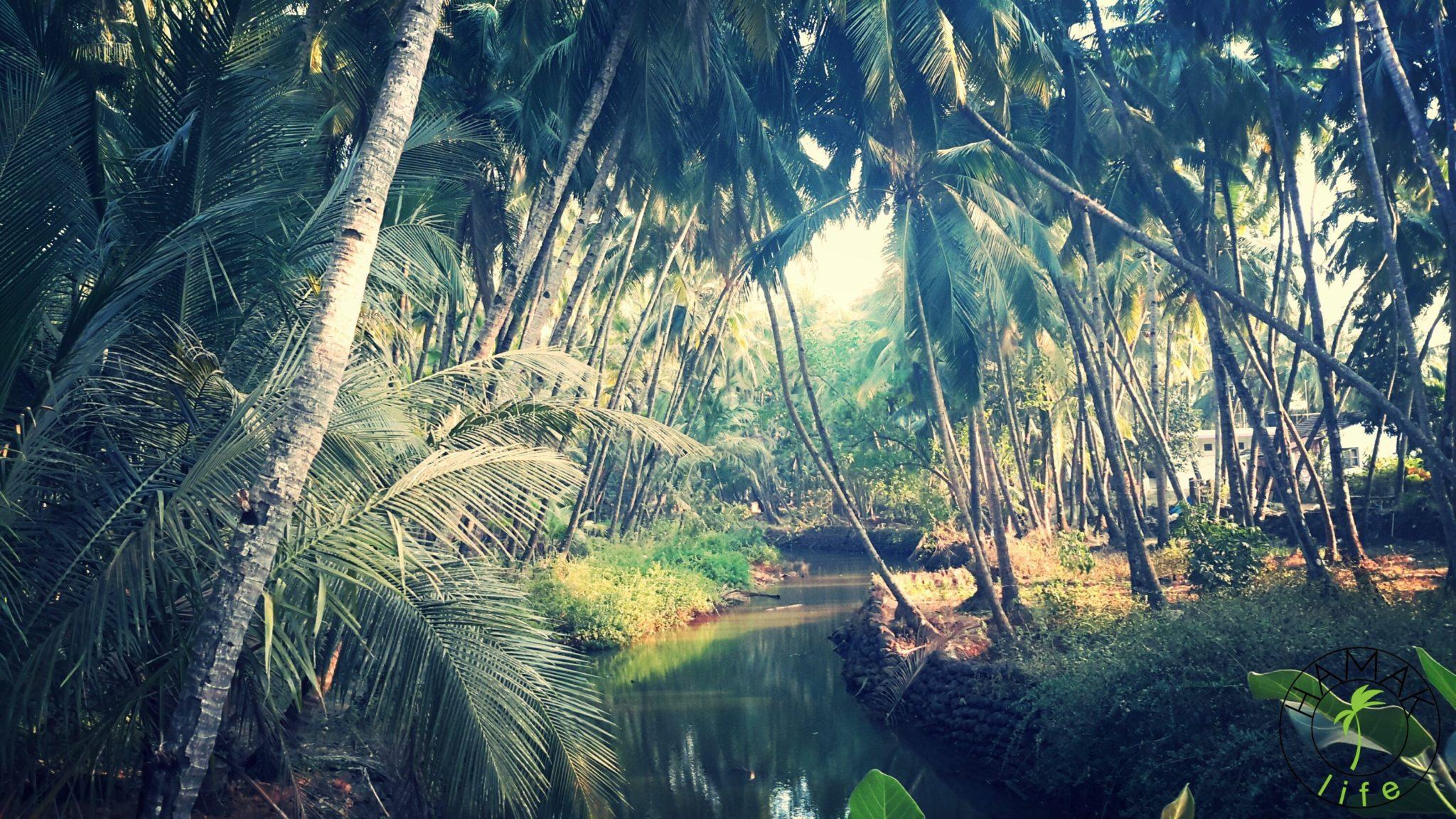 Południowe Goa. Spacer nad rzekę.