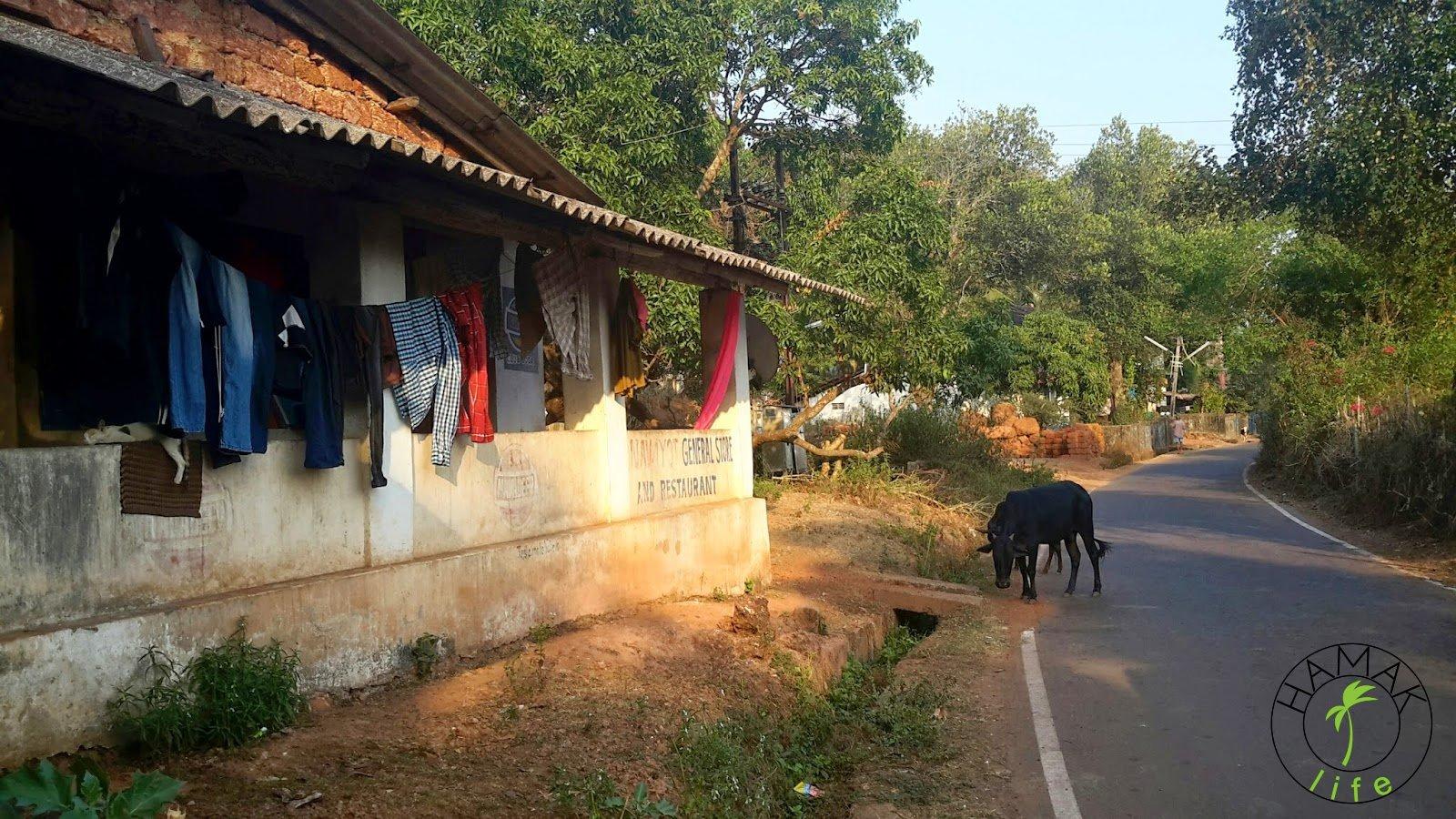 Garderoba suszy się na sznurku, kiedyś może była w walizce. W każdym razie na Goa w porze suchej wszystko błyskawicznie schnie, a nawet płowieje.