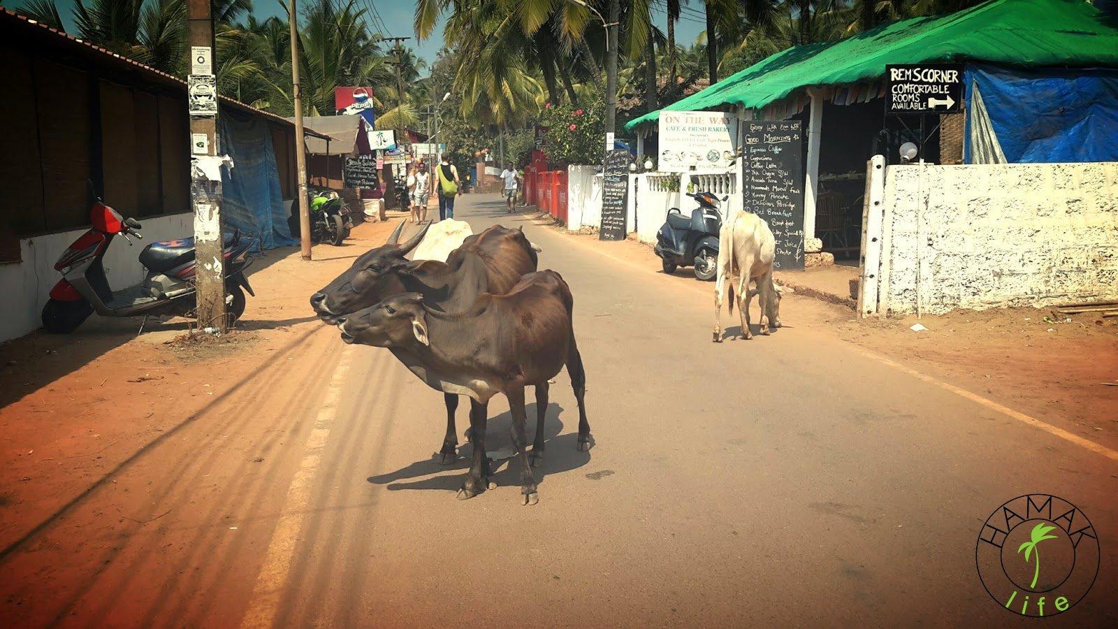 Indie, Goa, Agonda Beach2015