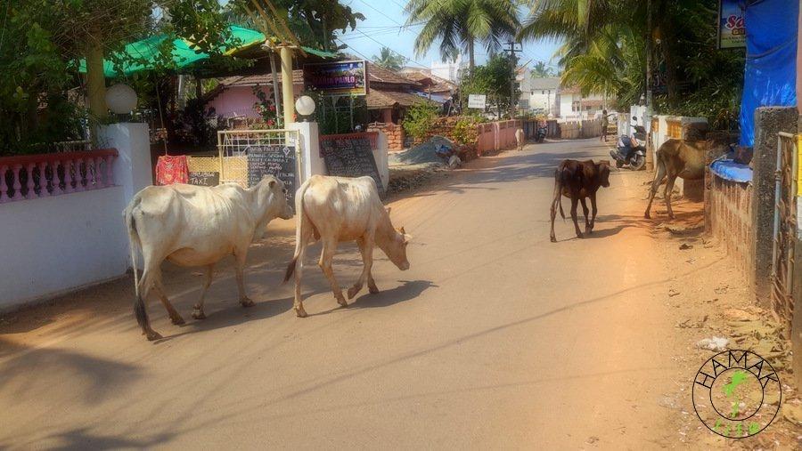 Agonda Beach, Goa, Indie 2015