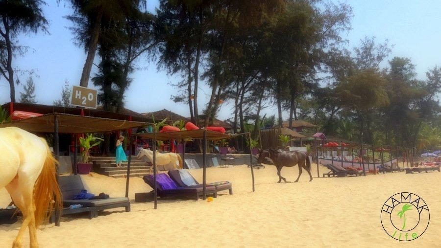Pocztówka z Goa, plaża na Agonda Beach