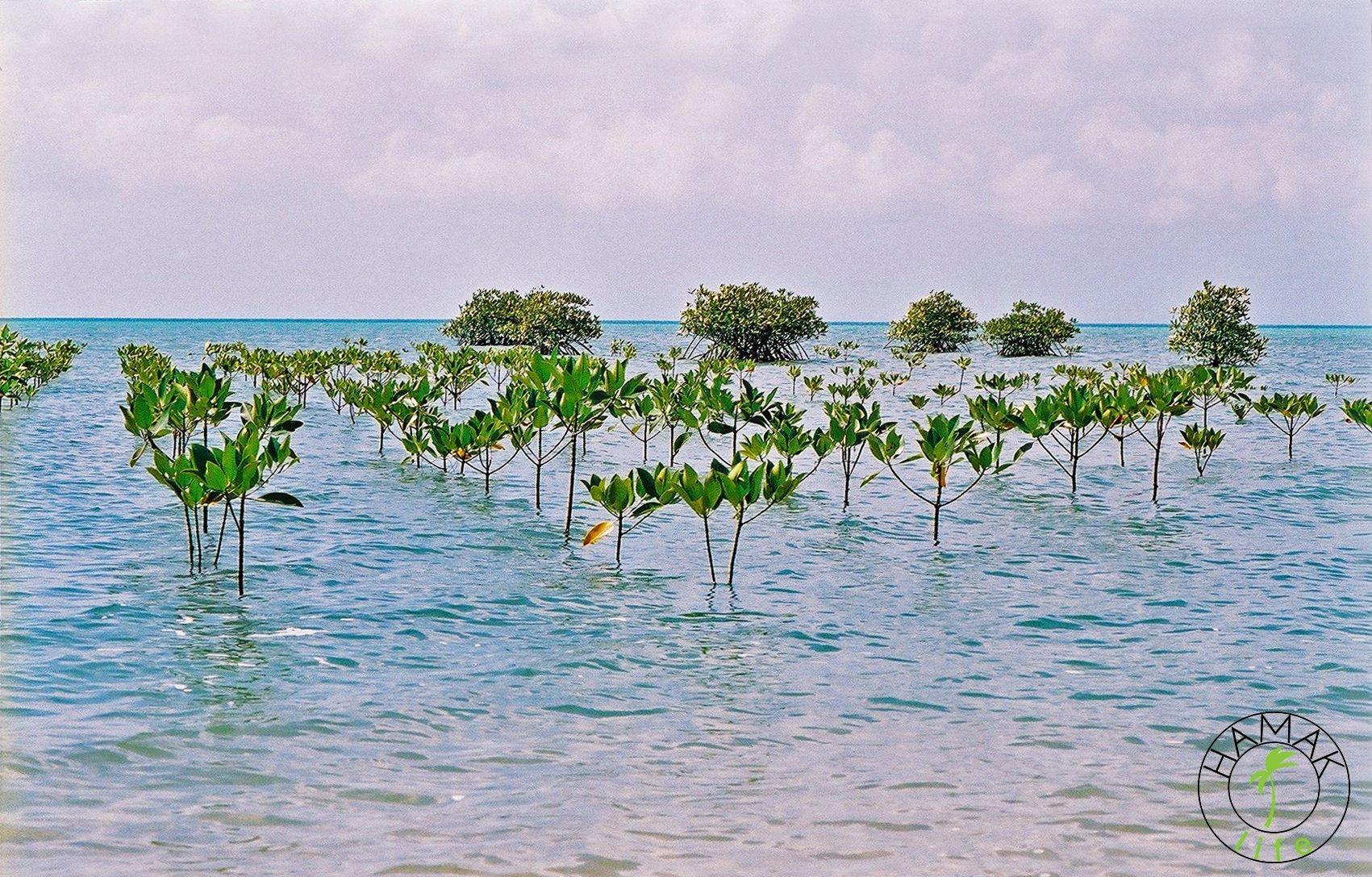 Mu Ko Ang Thong National Marine Park w Tajlandii.