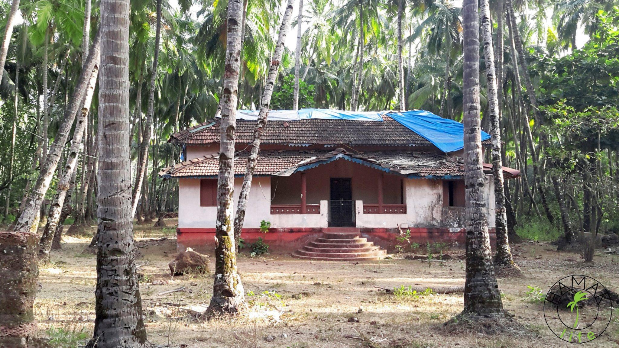 Opuszczony dom na Goa w palmowym gaju.