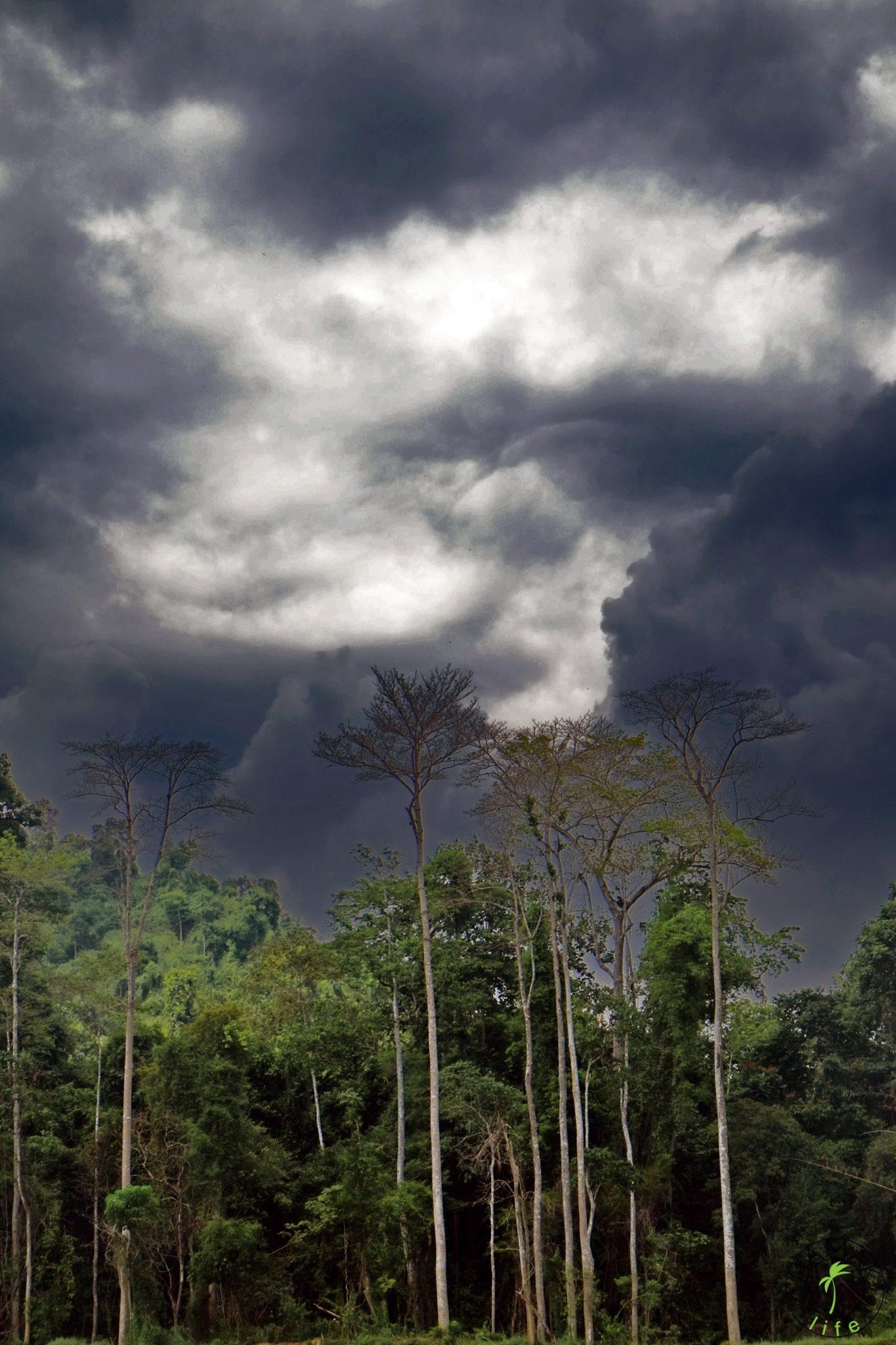 Dżungla mazlezyjska w porze deszczowej