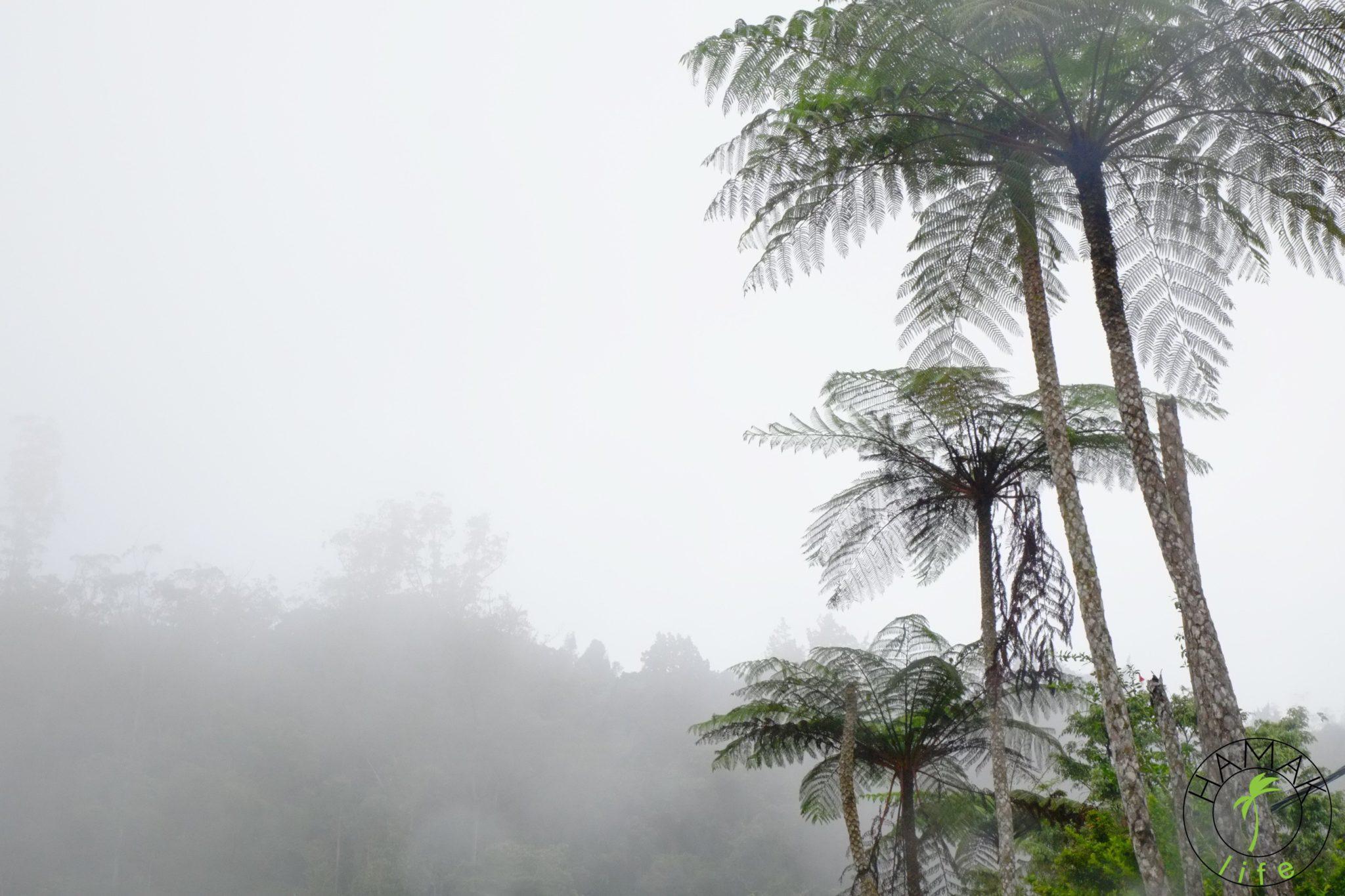 Mgła w Cameron Highlands. Opowieść malezyjska.