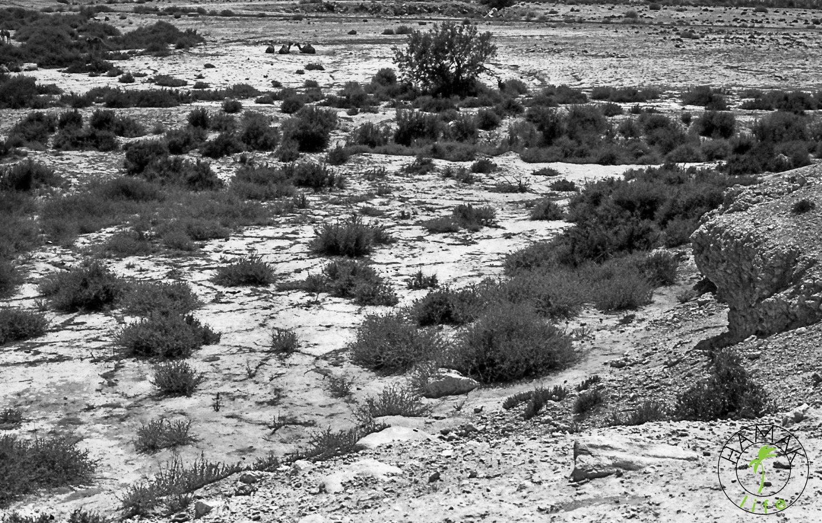Pustynia Paran przy granicy z Egiptem. Izrael.