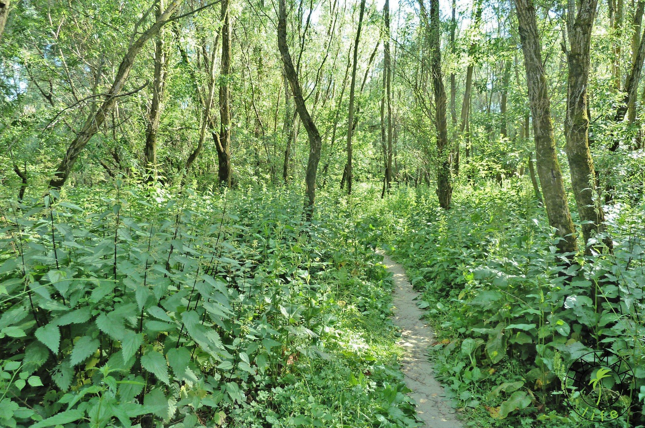 Leśne Zawady w czerwcu.