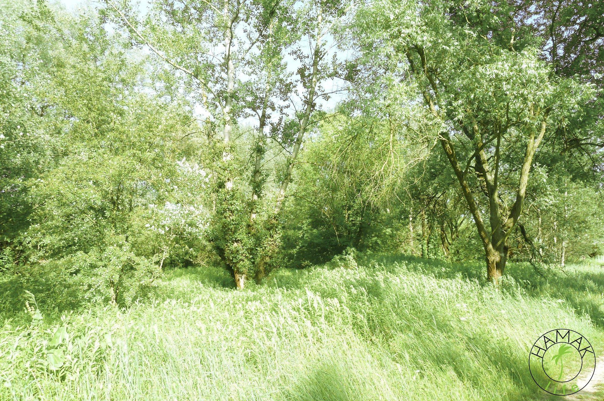 Lasy nad wałem na Zawadach, które mijacie po drodze na tamtejsze warszawskie plaże.