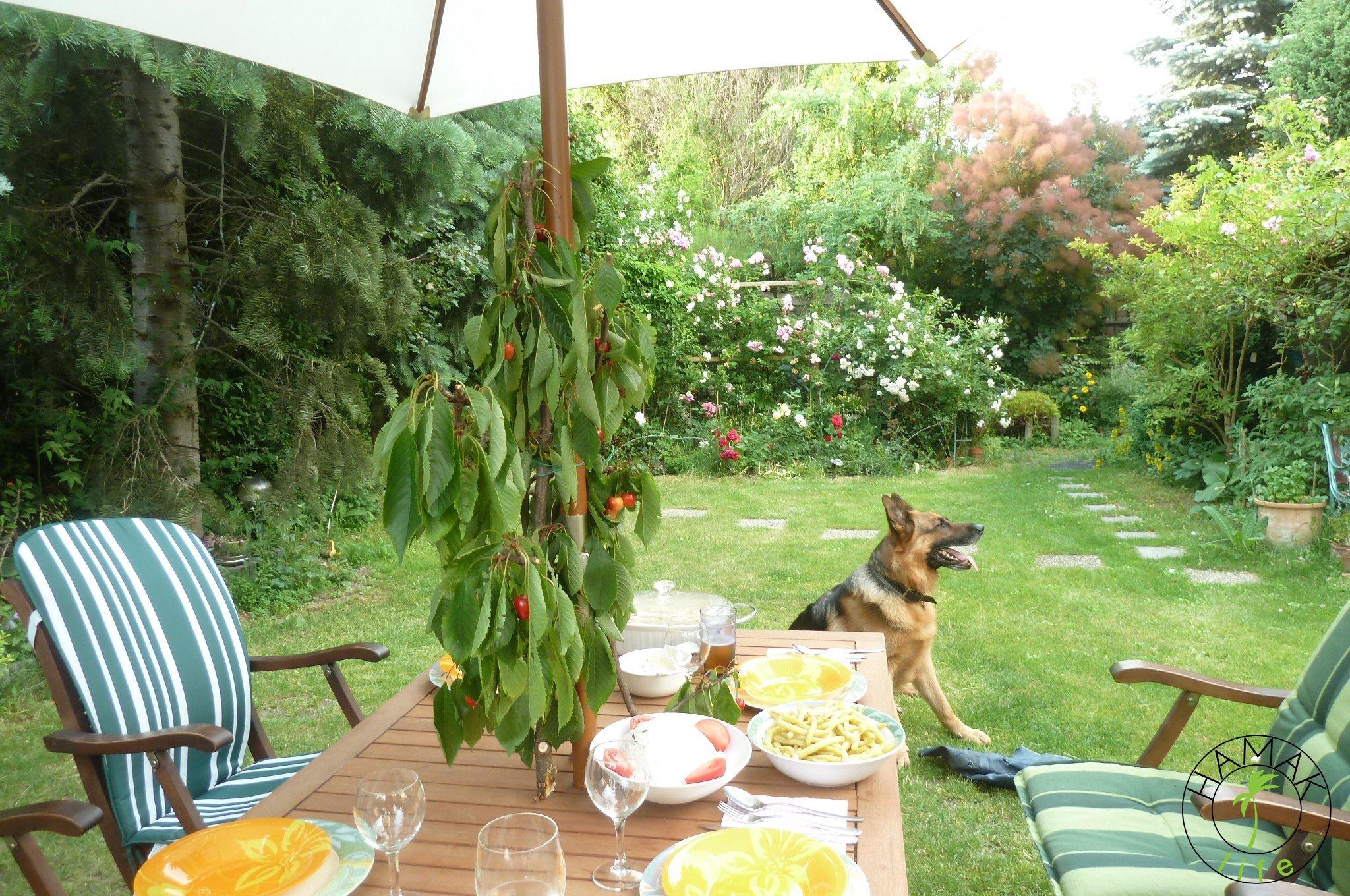 Planowanie dobrze rozpoczynać będąc najedzonym. Tutaj w ogrodzie.