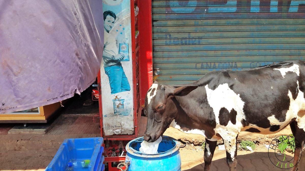Couchsurfing w wydaniu indyjskim, alternatywna pocztówka z Goa