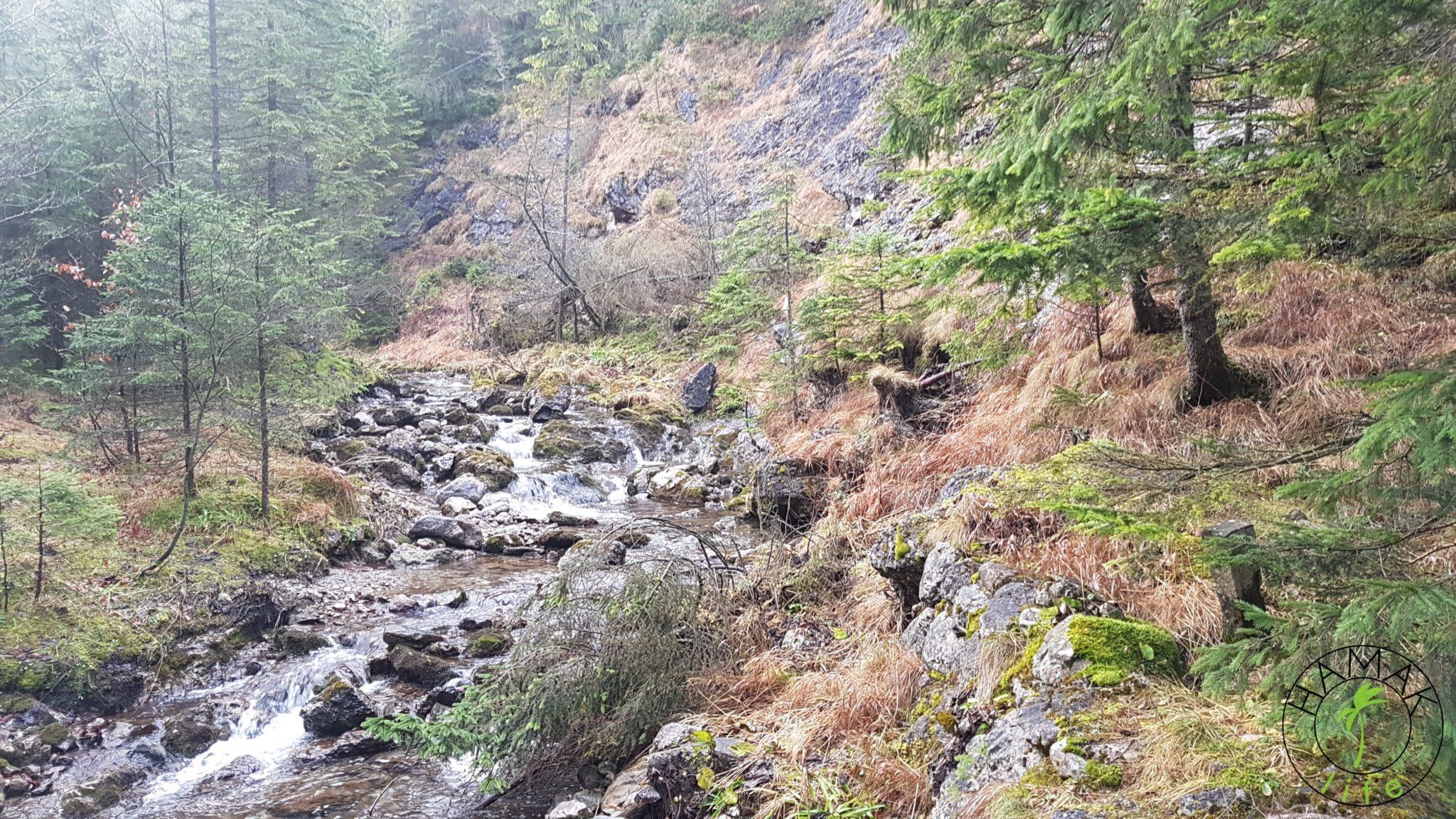 Dolina Strążyska w listopadzie
