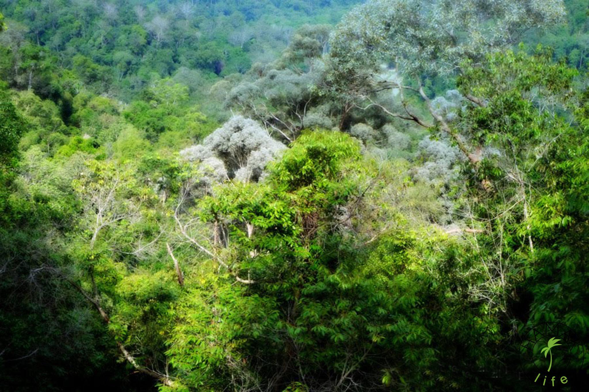 Taman Negara w Malezji - dżungla widziana z góry