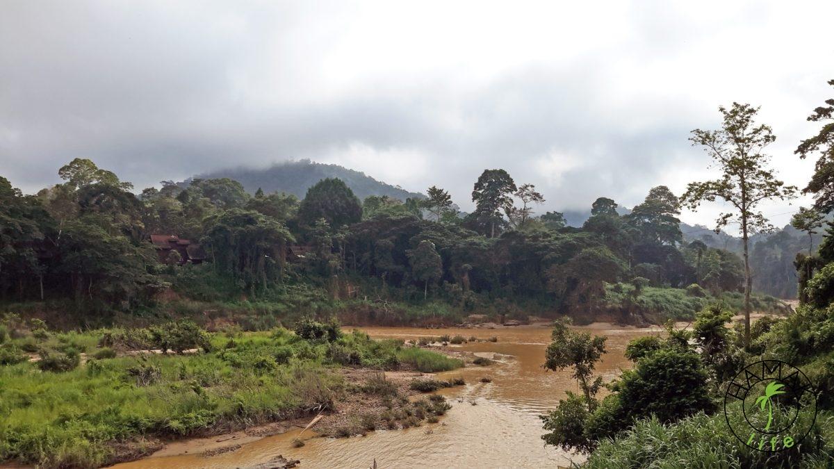 Taman Negara w Malezji